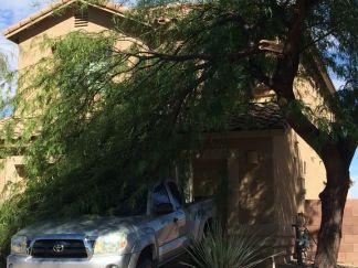 Tree removal, branch removal az