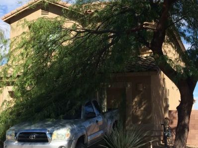 Tree removal, branch removal az