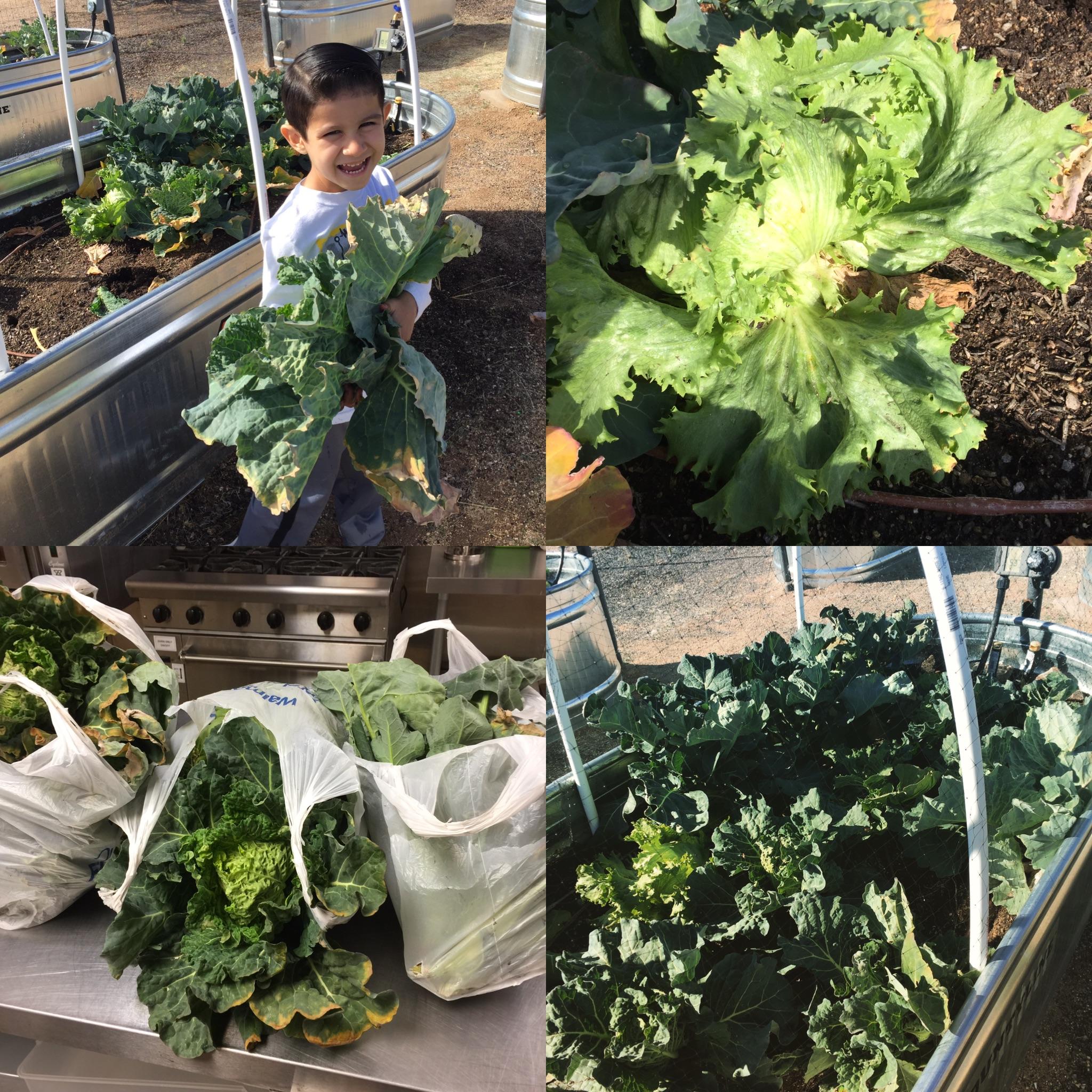 gardening_az_sahuarita_greenvalley